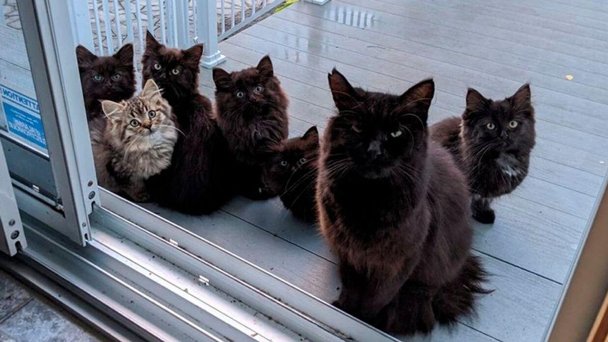 Una gata lleva a todas sus crías a conocer a la mujer que la da de comer cada día
