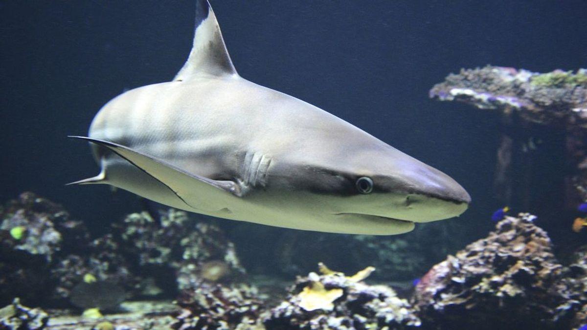 """Un surfero de 17 años sobrevive milagrosamente al ataque de un tiburón: """"Sus dientes atravesaron mi pierna"""""""