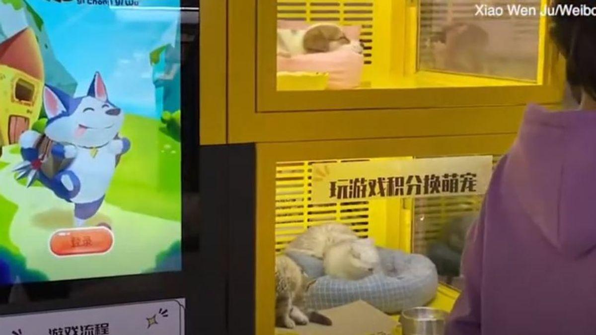 Una máquina expendedora ofrece crías de perros y gatos como premio