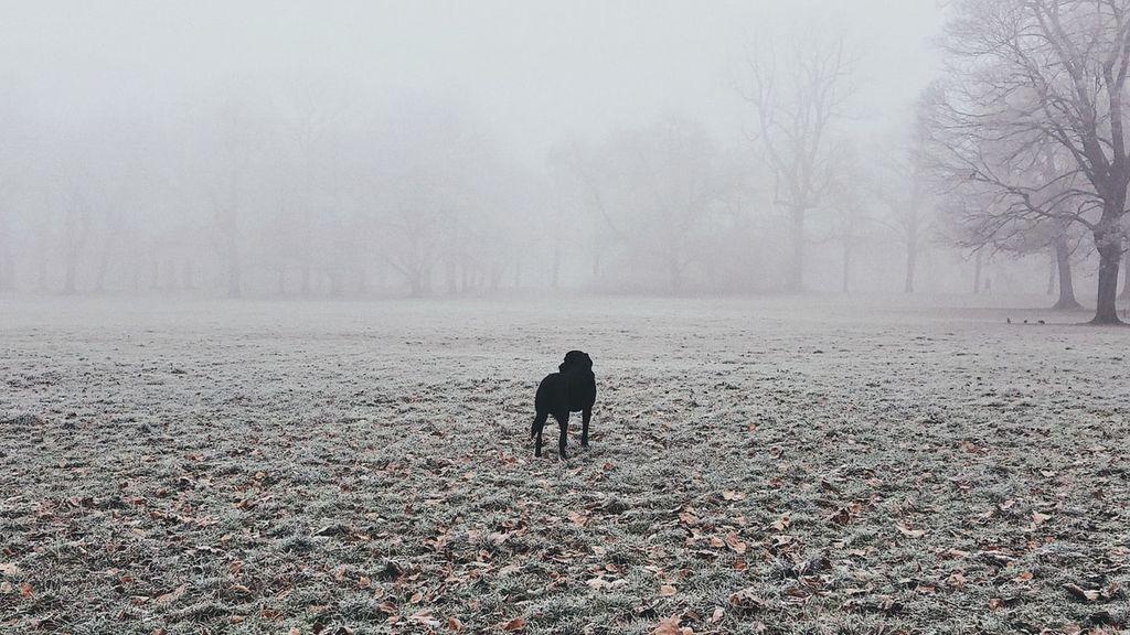 Llega el anticiclón con cielos despejados, noches más frías y niebla densa