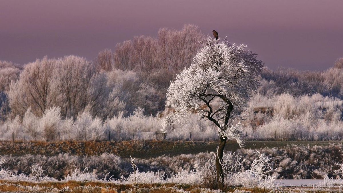 La niebla se puede congelar y es de los espectáculos más bellos del otoño-invierno
