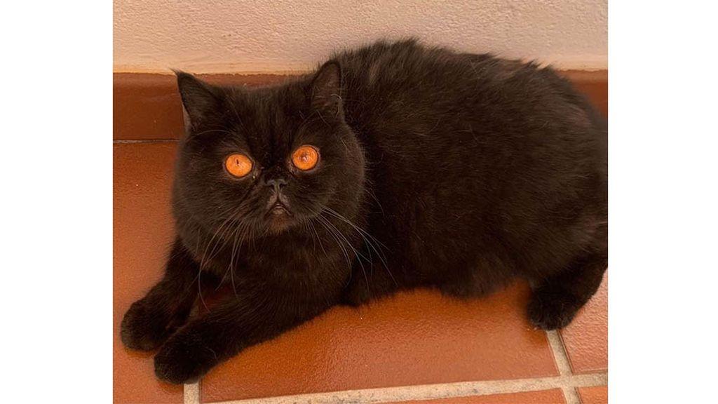 Valentino, el gato de Soraya Arnelas