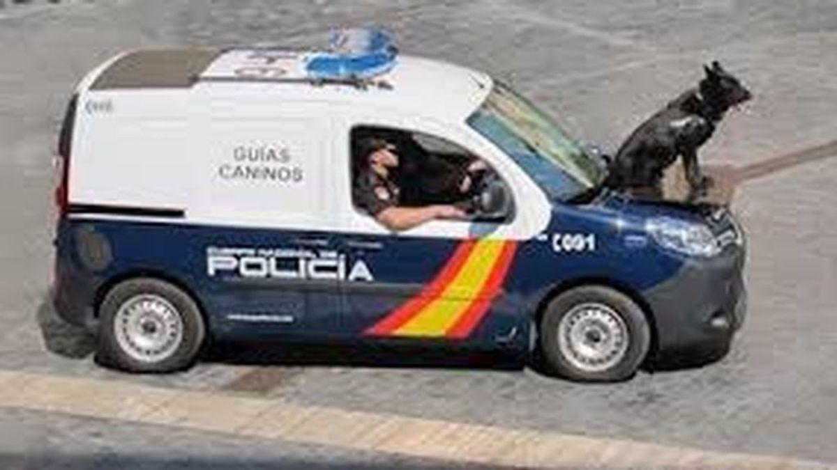 Interior condecora a seis perros policías expertos en drogas, armas o asaltos