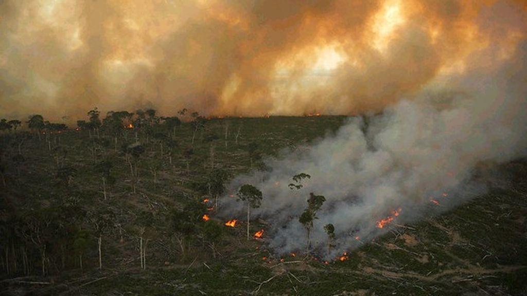 Más de un millón de personas pide a Bruselas una ley contra la deforestación y sus productos derivados en la UE