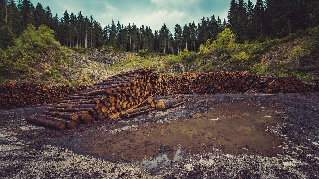 EuropaPress_3310157_mas_centenar_ong_piden_ue_luche_ley_contra_deforestacion_mundial