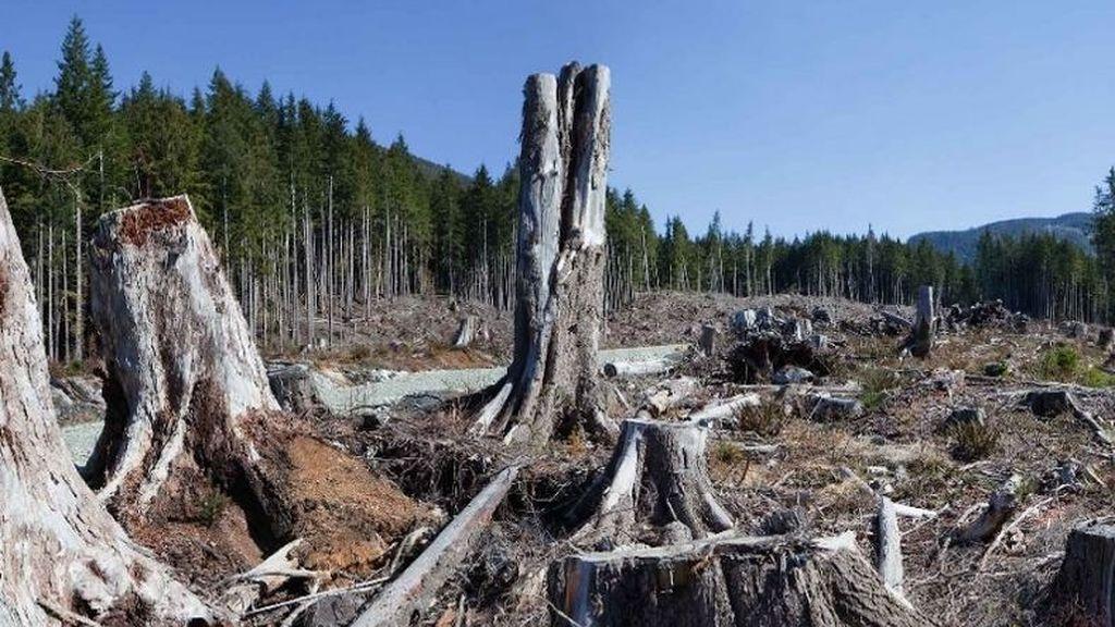 EuropaPress_2579655_deforestacion