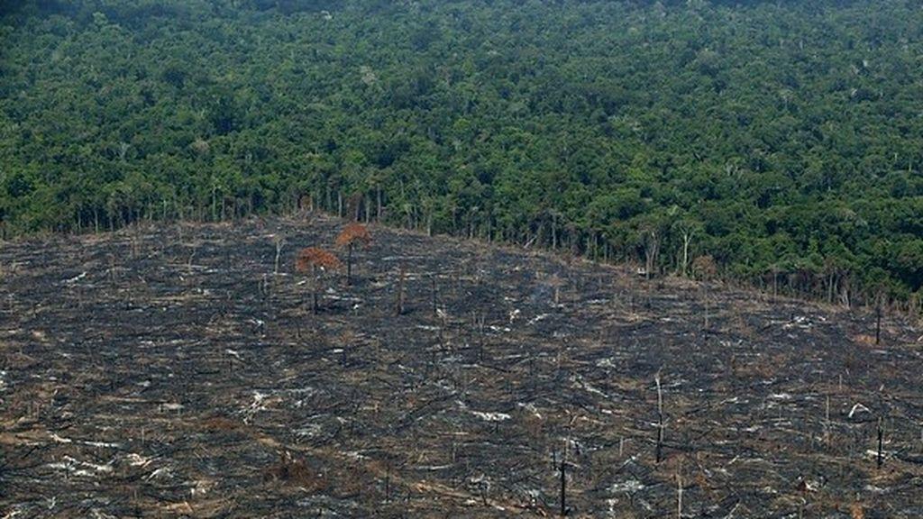 EuropaPress_3189140_greenpeace_denuncia_importacion_espanola_carne_procedente_deforestacion