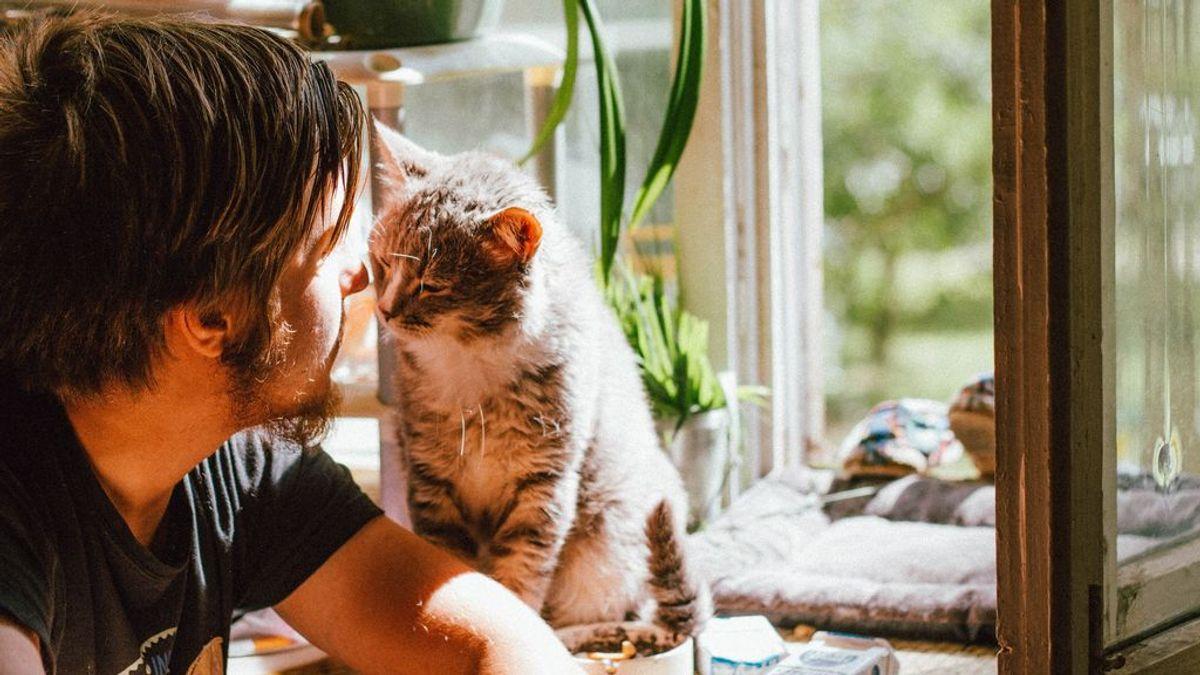 'MeowTalk', el traductor de gatos que ha desarrollado un ex ingeniero de Amazon