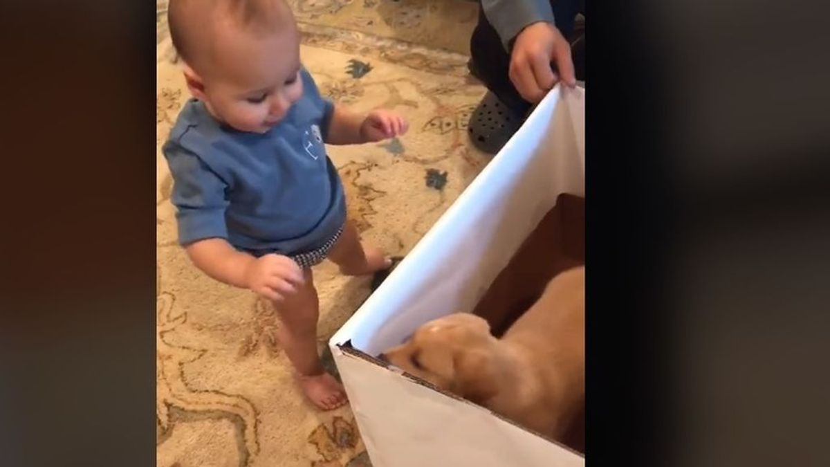 La conmovedora reacción de un niño al conocer a su nuevo mejor amigo, un cachorro