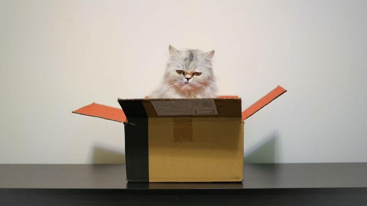 Seguridad, huidas, mejor humor… las razones por las que los gatos adoran las cajas de cartón