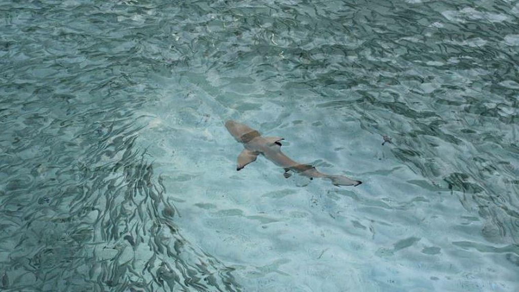 El momento en que un perro ahuyenta a un tiburón en una playa de Australia