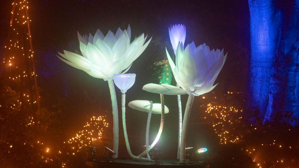 El Jardín Botánico ya 'luce' en la Navidad de Madrid: un espectáculo visual con más de un millón de luces led