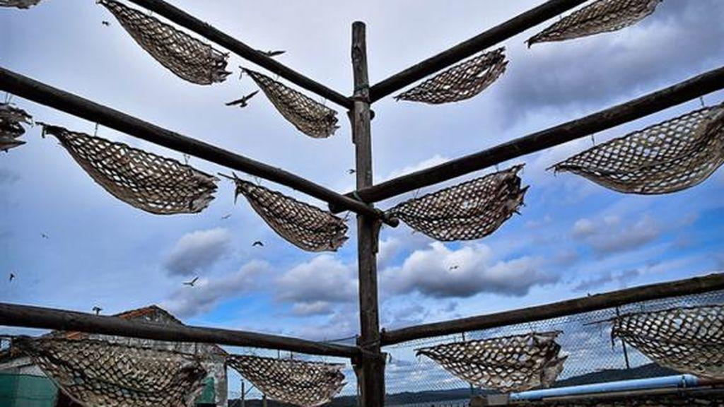 Seiscientos años intercambiando congrios secos por cabos para barcos