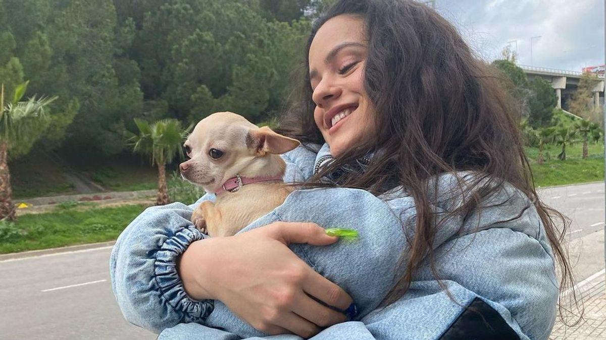 Mascotas y famosos: así son son los chihuahuas de Rosalía, Paris Hilton y otras celebridades