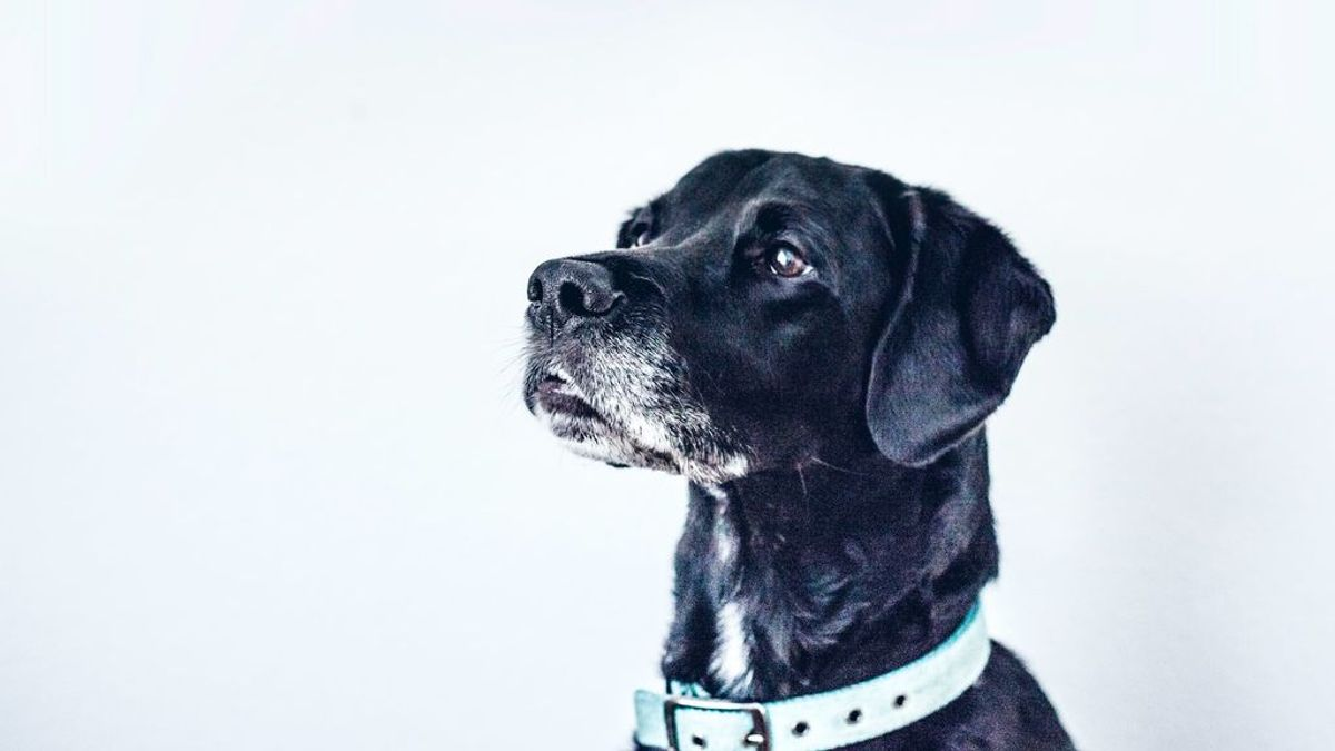 Una huella dactilar en la nariz de los perros, las patas de los tejones o las escamas de las lagartijas. Así es la forma que tenemos de identificar a los animales