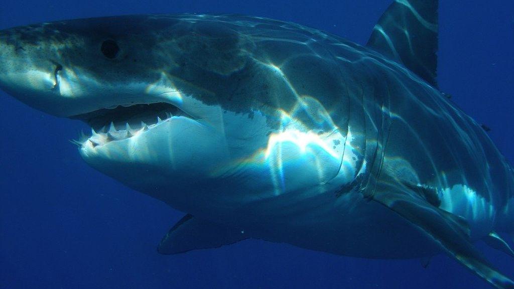 Un tiburón ataca y mata a un bañista de 55 años en una popular playa de Australia
