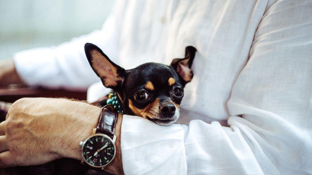 Las 10 razas de perro más pequeñas del mundo: ¿Las conoces todas?