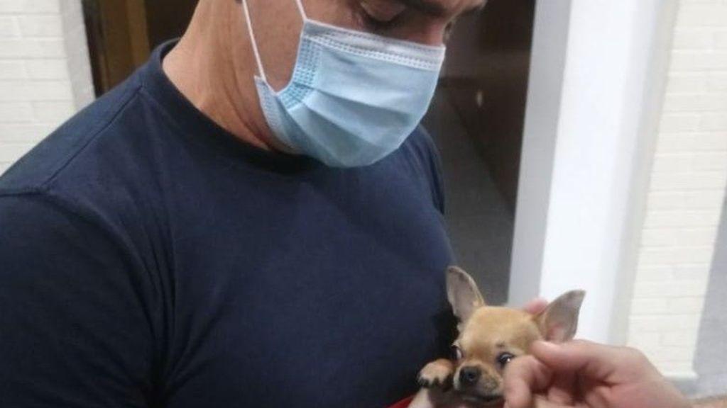 Bomberos convertidos en veterinarios para rescatar al pequeño Joy, un perro de un año