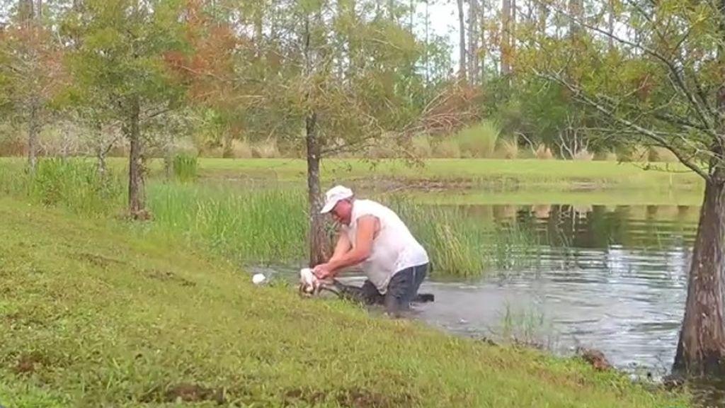 Por los pelos: un hombre consigue sacar a su cachorro de la boca de un caimán en Florida