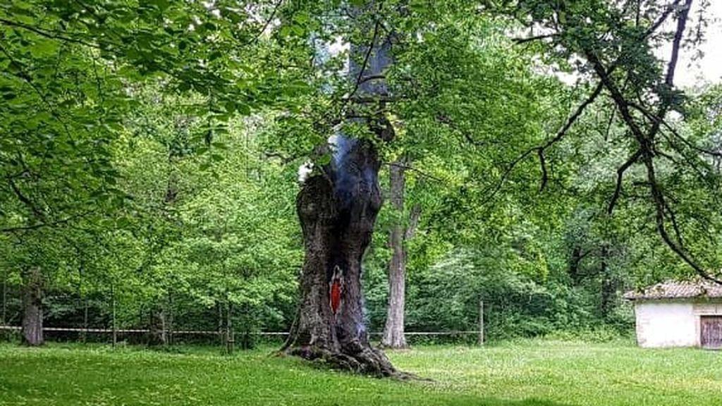 El rayo latente dentro del árbol: el riesgo de los incendios invisibles