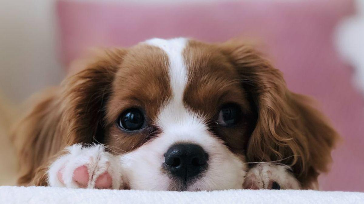 Seguros para animales de compañía: en qué consisten y cómo elegir el mejor para tu mascota