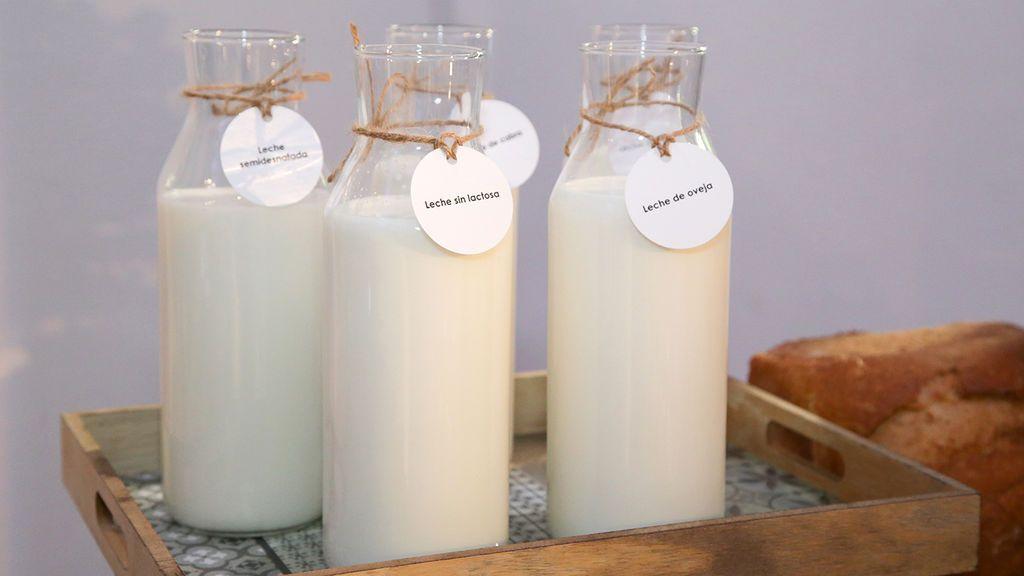 La leche y sus derivados son fundamentales para la salud de cualquier adulto: ¿qué nos aportan realmente?