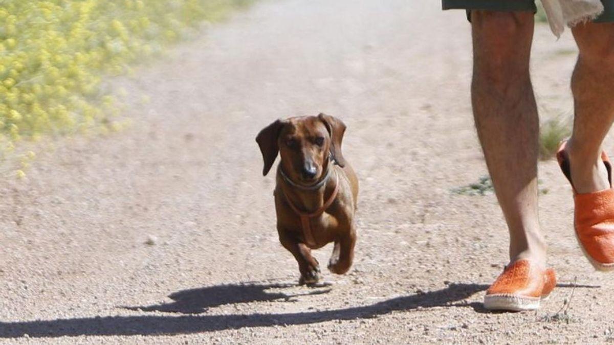Eros, el perro influencer bendecido por el Papa que lucha contra el abandono animal