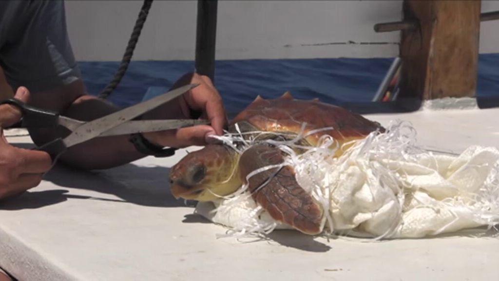 Pesca fantasma Cuatro al día #StopBasuraleza