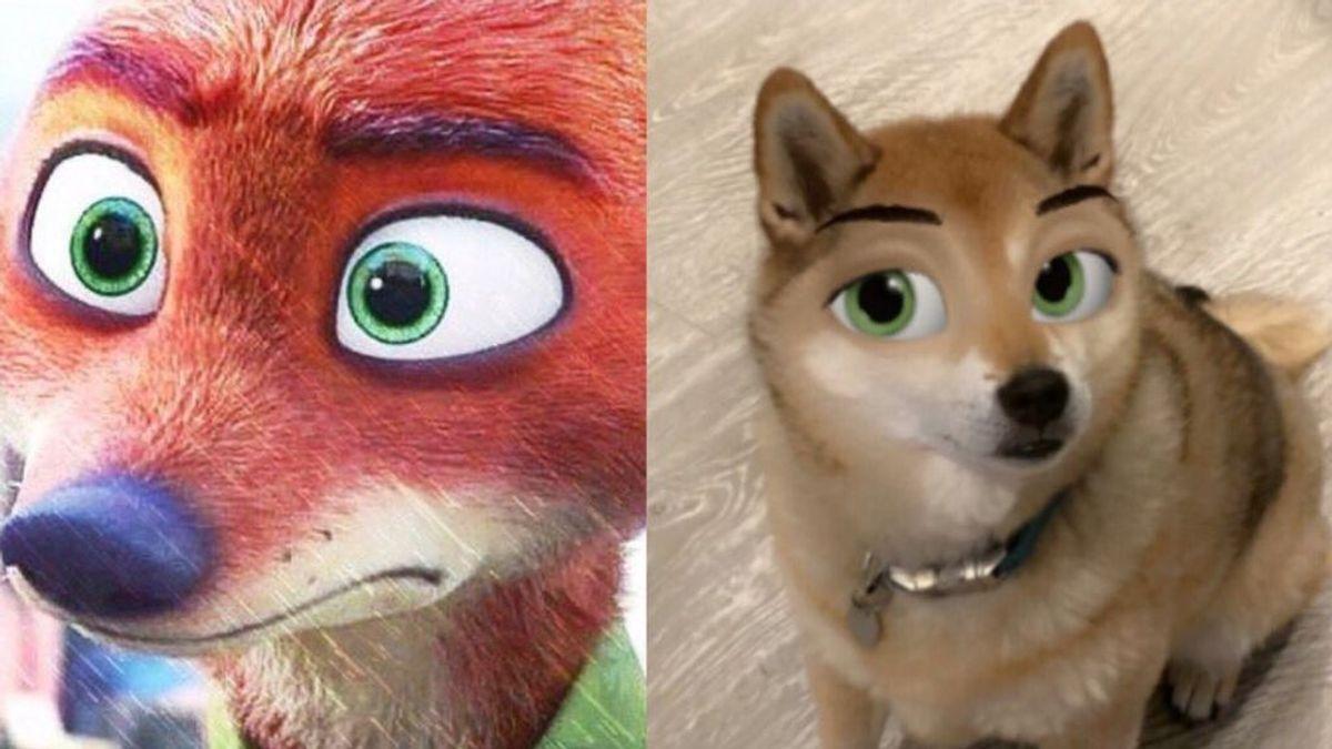 Mascotas con apariencia 'Disney': así se consigue el filtro para perretes más popular de TikTok