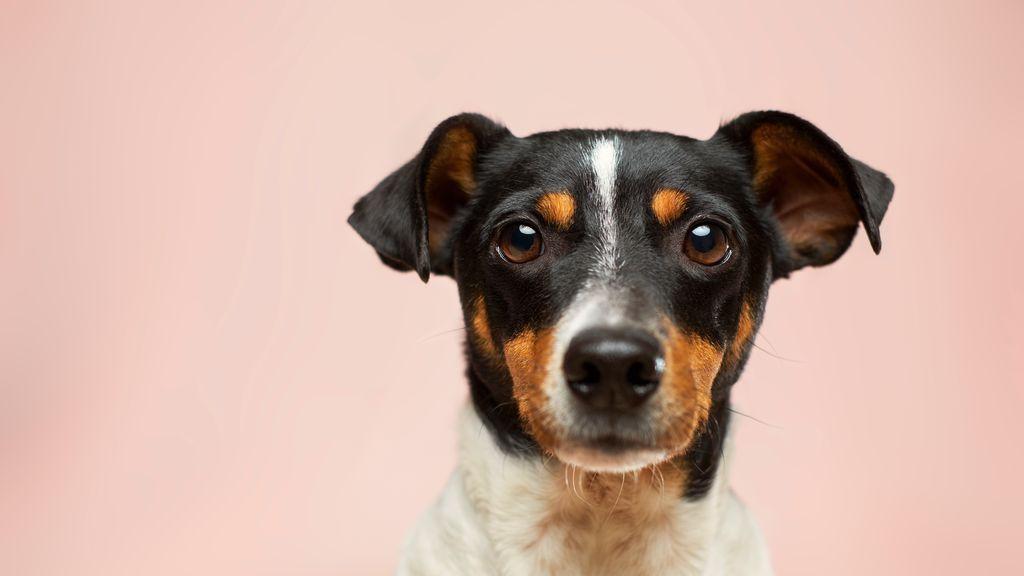 Breves, concisos y muy musicales: 10 nombres de cantante perfectos para perros