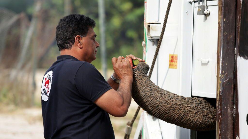 La cantante Cher rescata a un elefante de un zoo de Pakistán para liberarlo en un santuario de Camboya