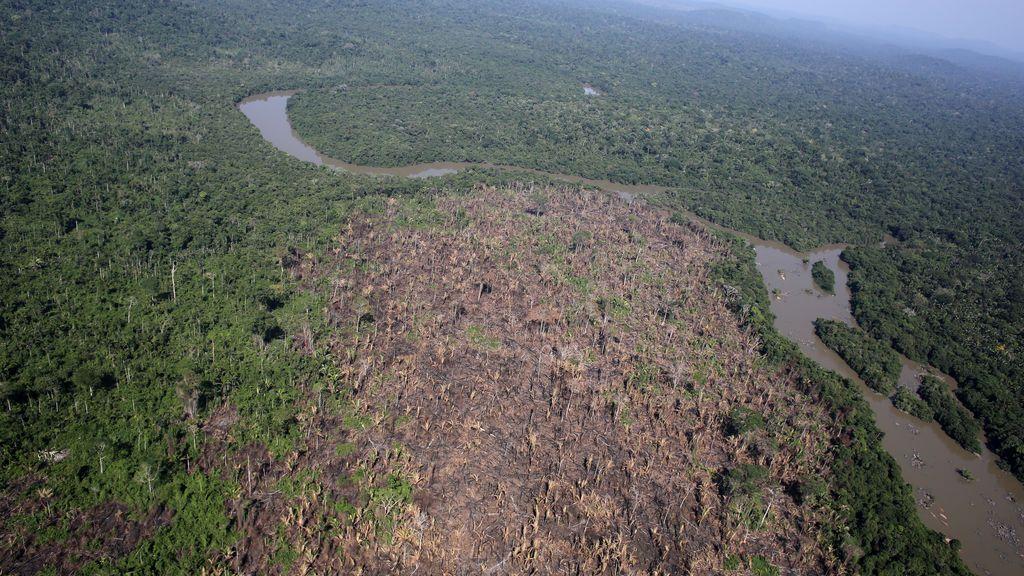 El grito de auxilio de la Amazonia: la deforestación en Brasil alcanza su mayor nivel en 12 años