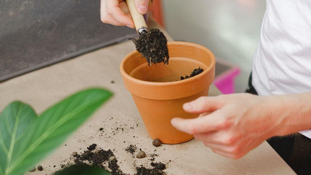 Cómo hacer compost casero para revitalizar tus plantas