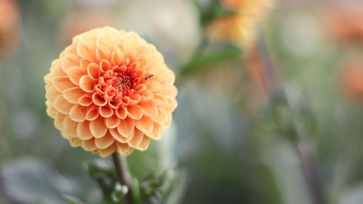 Los beneficios de la terapia floral: ¿Qué son las flores de Bach y para qué sirven?