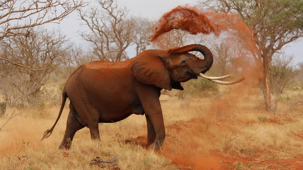 Namibia pone en venta a 170 elefantes