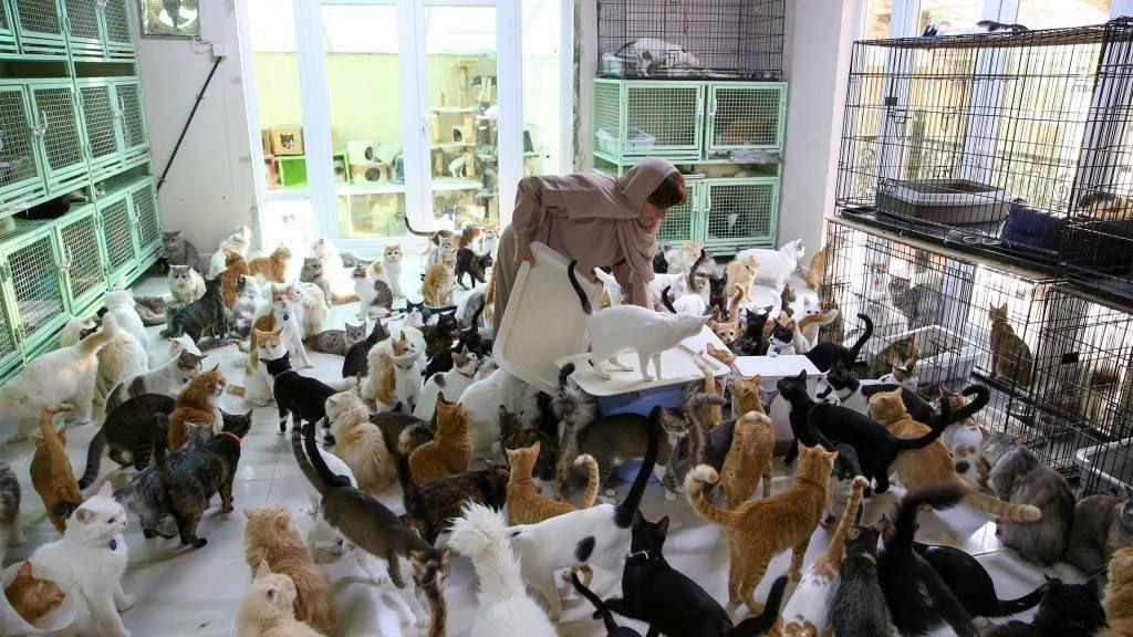 Miryam y sus gatos
