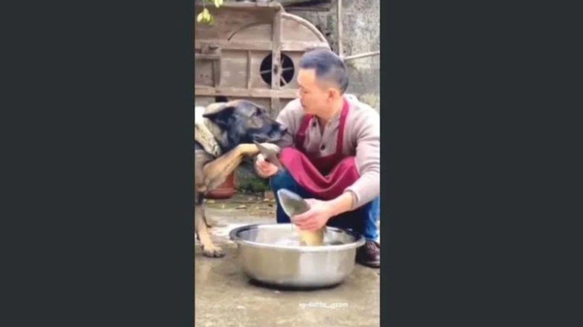 El gesto de un perro que ha conquistado a la Red: le quita el cuchillo a un hombre para que no mate a un pez