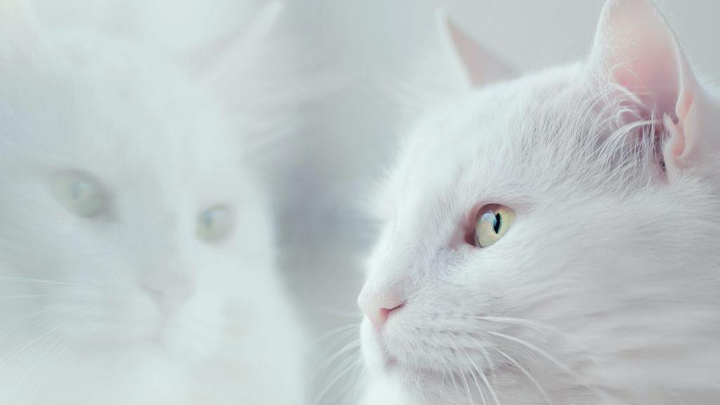 """""""Mi gato muerde los tobillos de todo el mundo"""": motivos y soluciones para este comportamiento"""