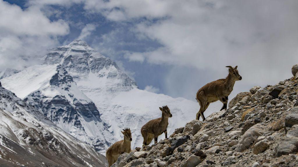 El Everest ha crecido: China y Nepal acuerdan su altitud definitiva