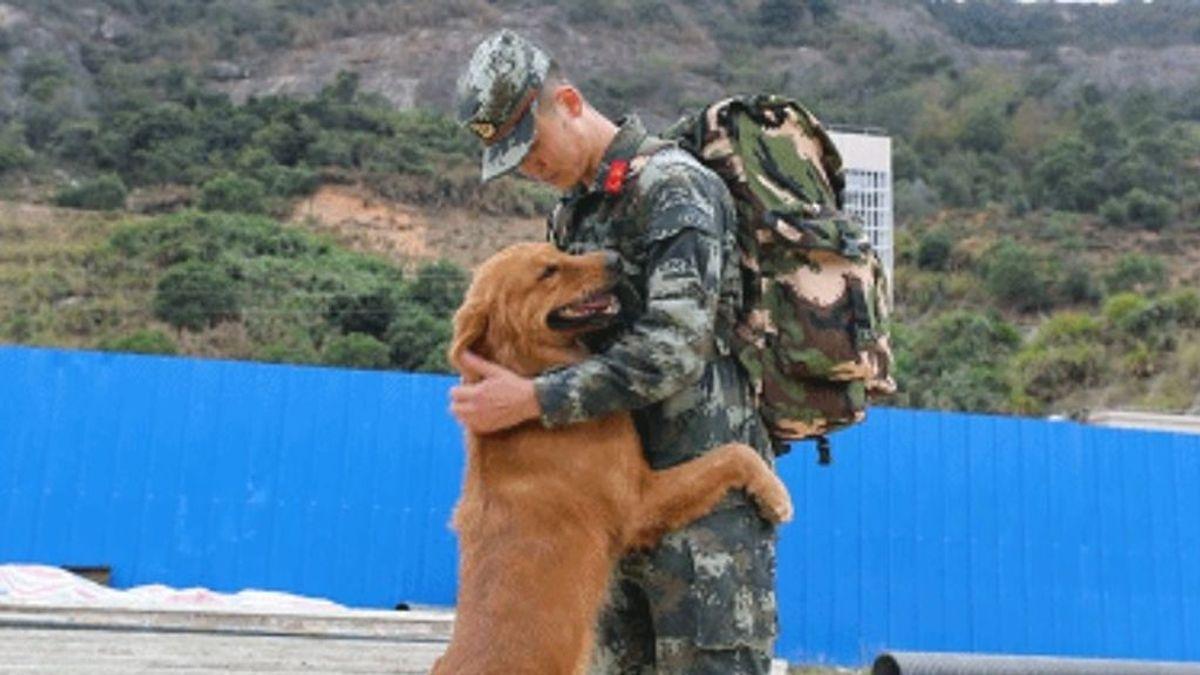 perro-militar-niega-retiro-soldado-adiestrador