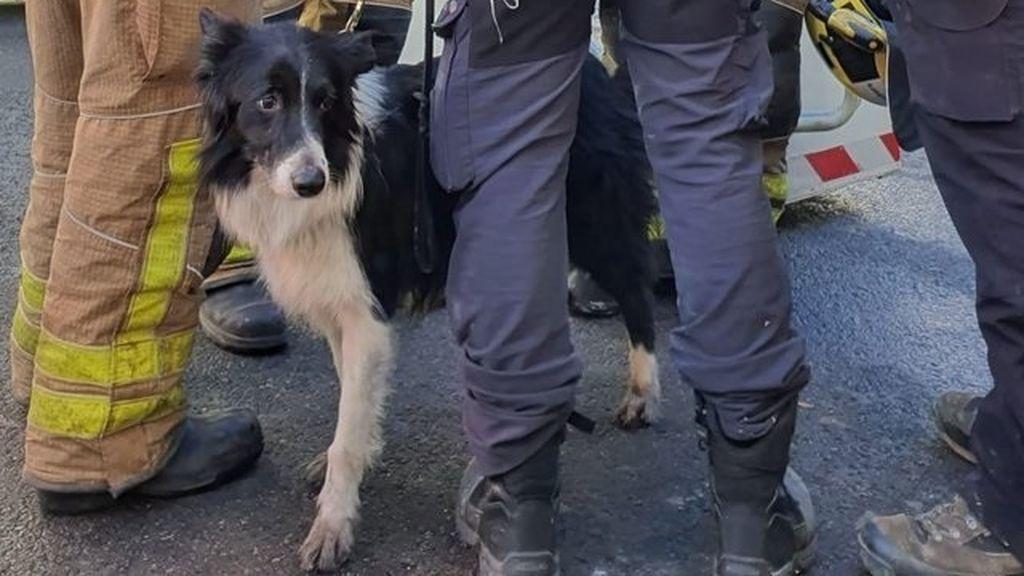Un perro especializado busca a personas en la nave