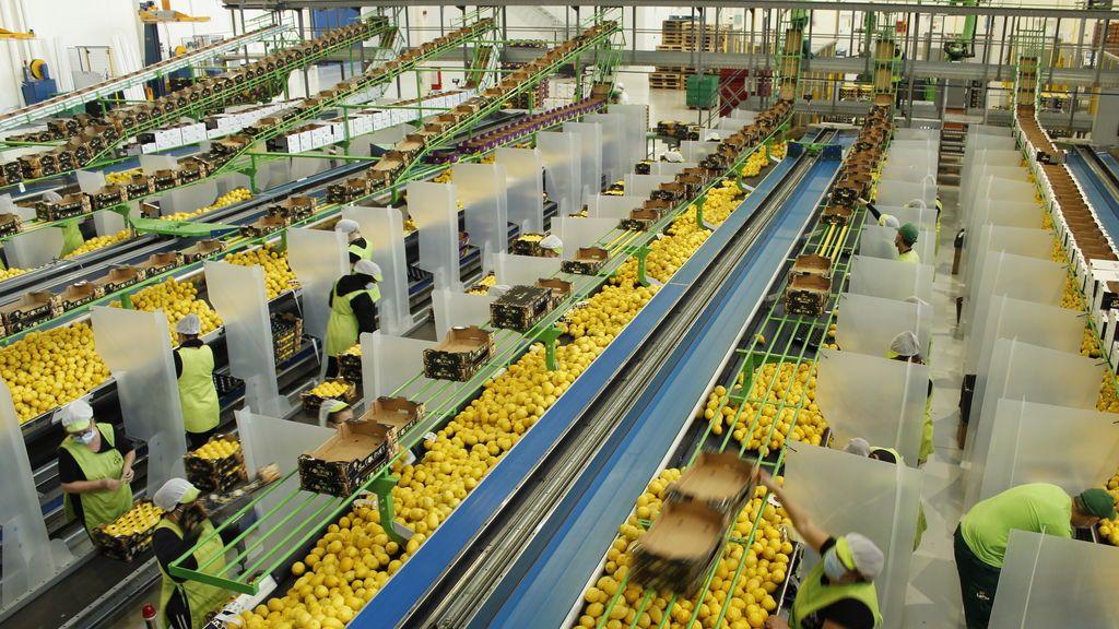 Europa produce unas 1.500.000 toneladas de limón al año