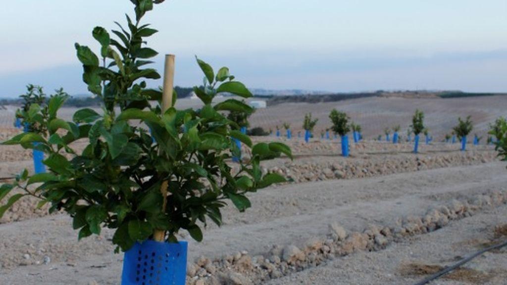El cultivo ecológico garantiza una utilización óptima de los recursos naturales