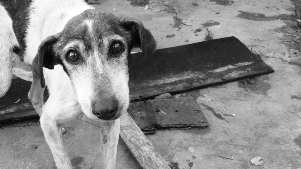 Los tristes datos de abandono de mascotas que ha dejado la pandemia
