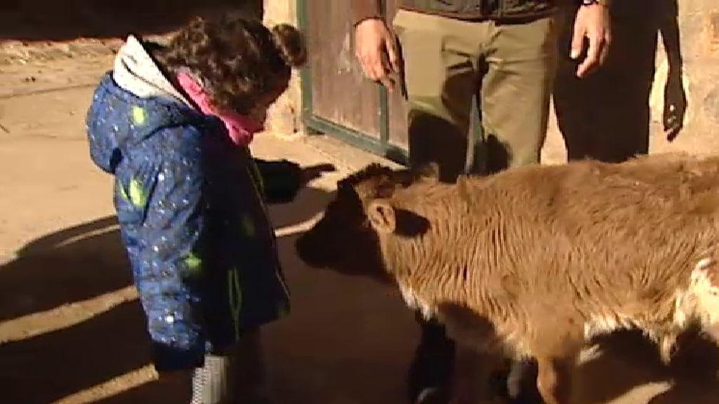 Terapia contra el cáncer infantil con animales en plena naturaleza