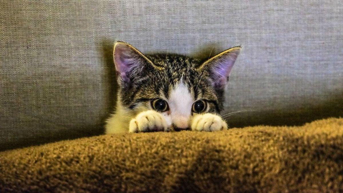 kitten-2558459_1280
