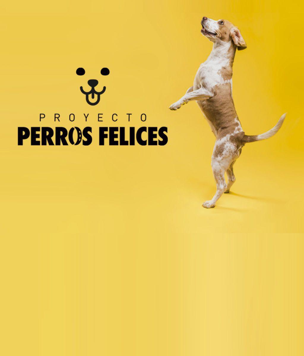 PERROS-FELICES 2