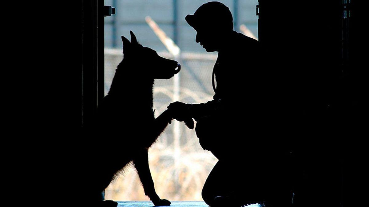 Perros felices - se adopta - iumiuky