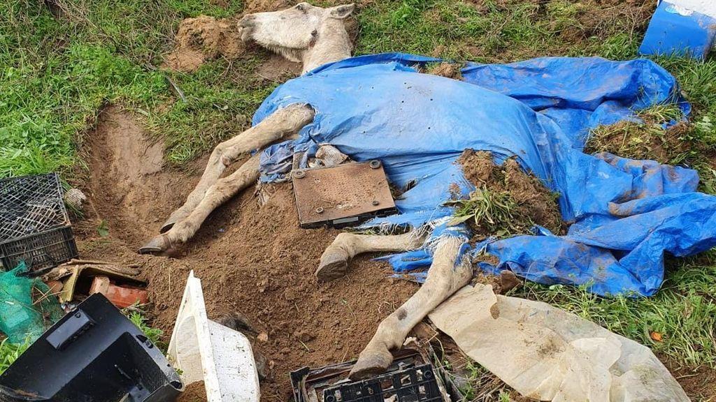 Bajo escombros, tierra y una bañera: así han enterrado a un caballo vivo en Huelva
