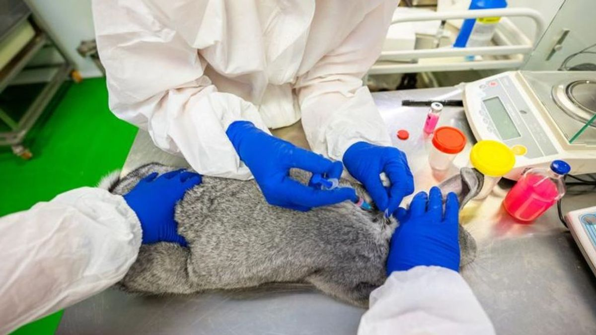 Vacuna para mascotas